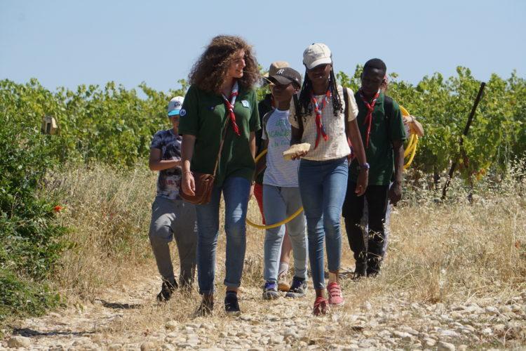 Exploration dans les vignes